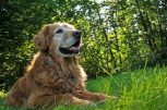 Senior kutyatápok